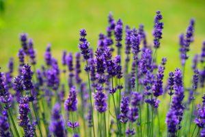 chas e ervas medicinais 4